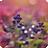 Win7官方主题-梦幻花园